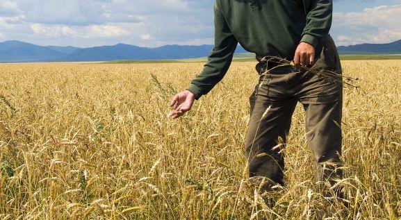 Asesoramiento Técnico Agrícola Prosanzcu