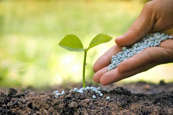 fertilizantes-prosanzcu